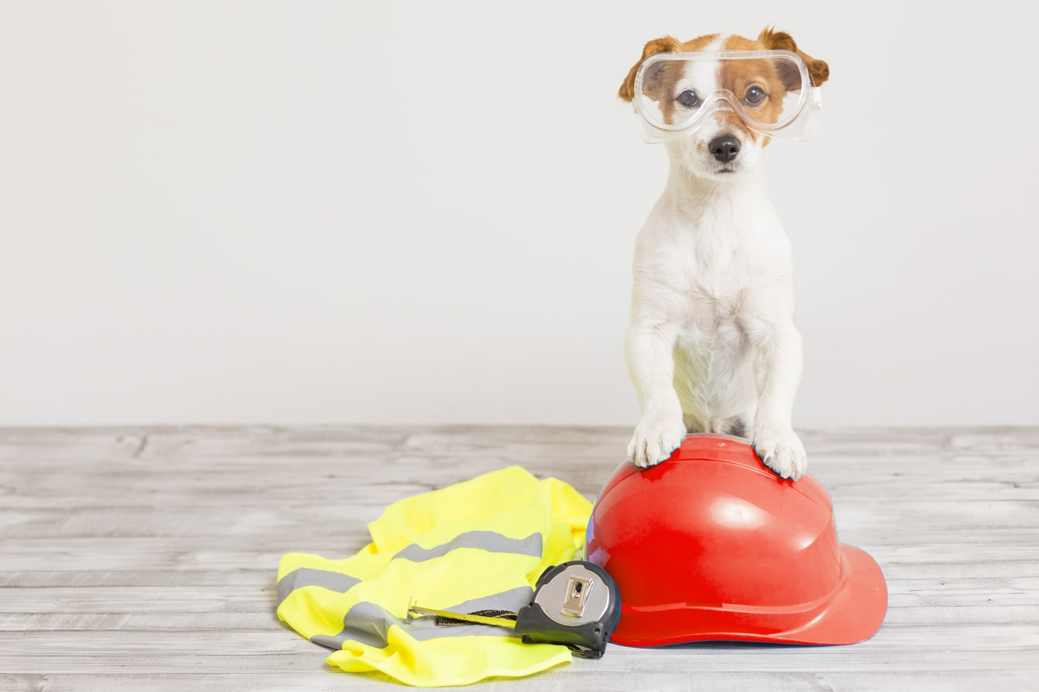 pet standing on red hard hat