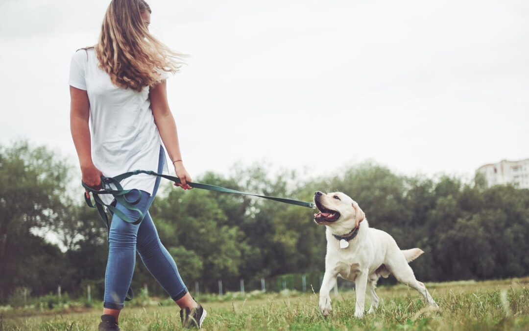 5 Questions You Might Be Afraid To Ask Your Pet Sitter
