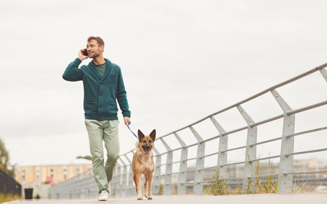 Advantages of Hiring a Pet Sitter